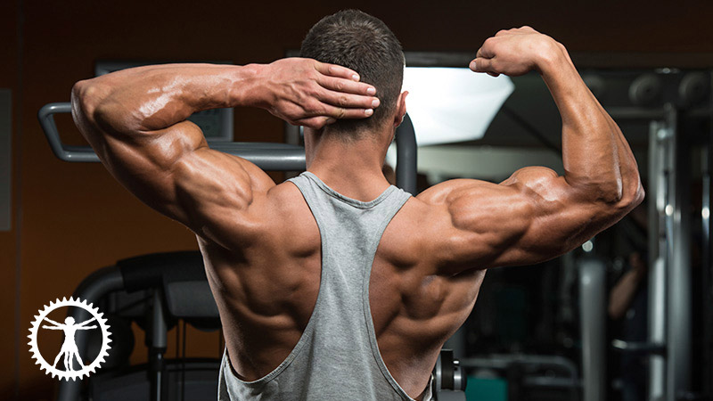 25 Quick Tips for Muscle Building